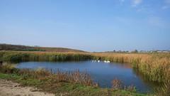 Lebede lângă satul Nuci