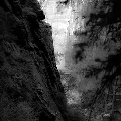 In Canyons 126 (noahbw) Tags: d5000 dof nikon utah zionnationalpark abstract autumn blackwhite blackandwhite blur bw canyon cliffs depthoffield landscape light monochrome natural noahbw rock shadow square stone trees