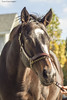 Interested (Casey Laughter Media) Tags: horse racehorse lexington kentucky thoroughbred famous champion horseoftheyear kentuckyoaks preakness winner stonestreet