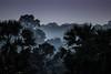Angkor, Cambodia (Aicbon) Tags: verde selva jungle forest sunset atardecer amanecer sunrise siemriep siemreap angkor ruins tropical sudesteasiatico sudestasiàtic southeastasian asia indochina indoxina blue azul horaazul cambodja cambodia camboya kampuchea khmer paisaje landscape cambodge cambogia camboja jiǎnpǔzhài 柬埔寨 kamboçya kambodia 캄보디아 kamboḍiyā कम्बोडिया kambodiya kambodja kambodscha kambodsja kambodža камбоджа kambodża камбоџа kambodzsa kamboja καμπότζη kemboja կամբոդիա tree arbol arbre bosc bosque