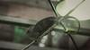 Color Change (lin.chinhu) Tags: saigon saigonese vietnam vietnamimage vietnamese hcm city hcmcity photograph photographs photographer photography coffeeshop flickr canon 60d 50mm len fix lenfix fixed animal animalplanet cute little cutie chame chameleon reptile reptiles supercool green colorful