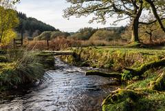 The Narrator Brook and clapper bridge, Dartmoor - NK2_4874 (Jean Fry) Tags: dartmoor dartmoornationalpark deancombearea devon englanduk narratorbrook narratorbrookarea trees uk water westcountry autumn brooks clapperbridges rivers streams