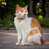 Cat (VladimirTro) Tags: россия санктпетербург кот кошка russia russian road saintpetersburg animal pet red outdoor colour colourful square bokeh dof foxy фото фотография зверюшка