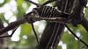 木場公園のコゲラ (Dinasty_Oomae) Tags: olympus omd olympusomd olympusem1 em1 オリンパス tokyo 東京都 江東区 kotoku bird コゲラ japanesepigmywoodpecker