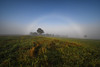 L'arc-en-ciel blanc, un phénomène naturel magique (Excalibur67) Tags: nikon d750 sigma 1224f4556iidghsm paysage landscape nature brume brouillard fog arbres trees campagne champs arcencielblanc fogbow arcenbrouillard