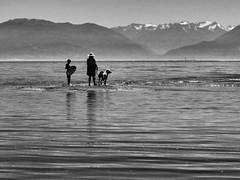 Caught on the Sandbar (geoffwi100) Tags: britishcolumbia pacificnorthwest pacific towerpoint witty'slagoon olympicmountains family dog sandbar metchosinbc