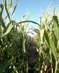 022 A Runner In The Corn (saschmitz_earthlink_net) Tags: 2017 california temecula bighorsefeedandmercantile cornmaze orienteering laoc losangelesorienteeringclub corn