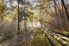 Herbstwald Hinterland 171018 (Bianchista) Tags: 2017 bianchista bunt herbst holzhausen laub oktober wald hinterland indiansummer forrest holz autum baum tree wood dunst nebel fog