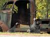 Wild turkeys and old truck (johnwise60) Tags: wildturkeys truck old oroville washington okanogancounty