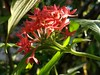 Wednesday click (Abraham Jacob N) Tags: redflower red flower nature kottayam kerala india motog5plus