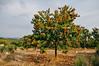 Penela da Beira (Viseu, Portugal) (Gail at Large | Image Legacy) Tags: 2017 peneladabeira portugal castanhas chestnuts gailatlargecom
