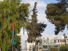 Christmas tree - Paris Square - Amman