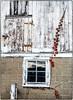 Barn Window (ammozug) Tags: barn window wood reflection vine cinderblock