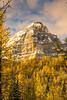 DSC08329 (www.mikereidphotography.com) Tags: larches fallcolors autumn canada canadianrockies lakemoraine larchvalley sentinelpass 85mm otus zeiss mirrorless a7r2 landscape golden