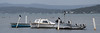 Perched (OzzRod) Tags: pentax k1 smcpentaxda55300mmf458 lake boats launches piles birds cormorants swans owl stitch panorama swansea lakemacquarie dailyinoctober2017