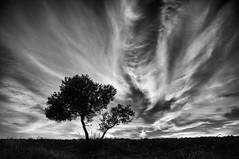 Cielo y tierra (una cierta mirada) Tags: tree earth sunset sky clouds cloudscape nature bnw blackandwhite silhouette olive outdoors lumix