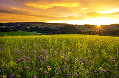 autumn fields (Lena Held) Tags: bavaria germany sunset sundown fields autumn landscape colored colors purple orange blue yellow travel global oberpfalz lights eve sunstar sunlight sunny sunshine wildlife outdoor outside lenaheld canon canon5dsr 1635 sky clouds glowing