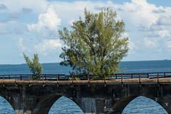 Nature is Amazing (maijasofia) Tags: sevenmilebridge oldbridges nature floridanature floridabridges thefloridakeys marathonflorida floridaarchitecture natureflorida floridalandscape landscape gulfofmexico ocean staysaltyflorida preirma