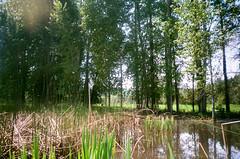 5.2017 LLWM W Branch Little Spokane Wildife Area  N. C41 CPS0020 (Jcicely) Tags: 2017 easternwashington kayaking lightflare loonlake loonlakewithmarvin may reeds trees water