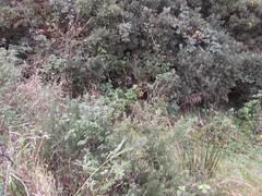 Site visits Ballycastle 19/10/2017 (irishlad031) Tags: irishlad irishlad031 ireland ballycastle coantrim ulster
