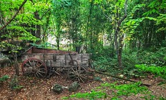 Wagon in the Woods (Pejasar) Tags: flatbedwagon wood antique old missouri silverdollarcity green trees wagon