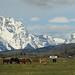 Teton - Horses Farm