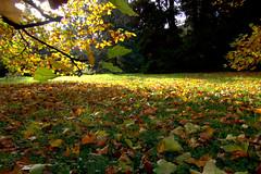 carpet of leaves (herman hengelo) Tags: arboretum poortbulten delutte autumn twente thenetherlands tokina1116mm canoneos60d