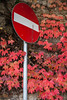 IMG_4166 (Niki.Suppan) Tags: vienna autumn fall october oktober herbst wien wanderung wandern leopoldsberg hügel canon eos ef 2470mm 28 f28 dslr slr spiegelreflexkamera vollformat fullframe 5dii