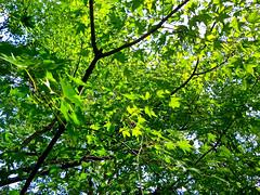 実はその時が、一番輝いているのかもしれません。ある事の、前。 (aozora.umikaze) Tags: japan kyoto kagayaki aozoranoiro nikon s3000