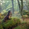 spirit guide (steve-jack) Tags: hasselblad 501cm 80mm cb kodak ektar film medium format 6x6 120 bellinifoto monopart c41 kit epson v500 woods wales pembrokeshire moss