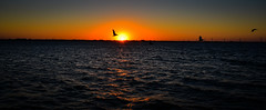 Panoramic view of Sunset over Indian River - Melbourne Beach FL (mbell1975) Tags: melbournebeach florida unitedstates us panoramic view sunset over indian river melbourne beach fl fla america american usa sun orange yellow water bay ocean atlantic cove
