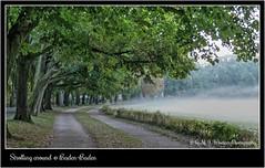 Strolling around @ Baden-Baden 86 (Michael J. Woerner) Tags: baden badenbaden lichtenthal lichtenthalerallee klosterwiese nebel morgennebel allee morgenspaziergang lichtental lichtentalerallee