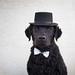 38/52 Nemo aka Magic Mike (- Una -) Tags: 52weeksfordogs nemo curly curlycoatedretriever ccr retriever curlydog dog animal blackdog blackcurlycoatedretriever water sky