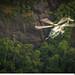 Helicóptero H-36 Operacional.