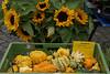 Melsungen, Marktplatz, Sonnenblumen und Kürbisse (sunflowers and pumpkins) (HEN-Magonza) Tags: melsungen hessen hesse deutschland germany marktplatz wochenmarkt rathaus townhall market sonnenblume kürbis sunflower pumpkin weeklymarket farmersmarket