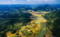 Beautiful landscape with rice field and mountain from drone in Cao Bang province, Vietnam (:: Focus Studio ::) Tags: vietnamese bang environment grows nature sapa colorful terrace yellow vietnam river mountain country golden earth flow agriculture house land cao drone green people ancient bangioc village harrow nam crop china travel sunlight local sunrise flycam above rice highview ecology ground soil traditional farm early viet
