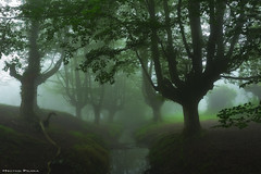 Mystic river (Hector Prada) Tags: bosque niebla rio árbol hojas hayedo bruma verano atmósfera misterioso encantado forest fog river tree leaves mist creepy enchanted charmed magic misterious mood water reflections paísvasco basquecountry