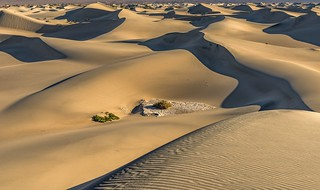 *sea of dunes*