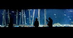 L'Oceanogràfic (kosebengisu) Tags: valencia spain loceanografic sealife humans humanbeings blue black shadow animals sea difference water nature ocean oceanographic travel
