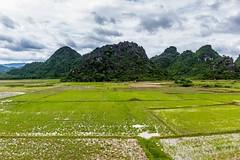 Travička zelená... (zcesty) Tags: vietnam14 rýže pole krajina hory vietnam phongnha dosvěta quảngbình vn