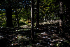 0342 (Shota Fukuda) Tags: 日本 japan 岩手県 遠野 神社 shintoshrine 早池峰神社