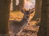 20171014-DSC_0613 (M van Oosterhout) Tags: amsterdamse waterleiding duine natuur nature flora fauna landschap landscape dutch holland amsterdam nederland netherlands animals