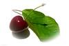 Mon Cherry (mesocyclone70) Tags: cherry fruit food closeup white macro close leaf heart purple green nature edible ngc