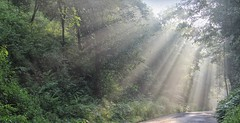 Showing the Light (SivamDesign) Tags: canon eos 550d rebel t2i kiss x4 18135mm zoom kit canonefs18135mmf3556is wayanad kerala forest landscape light rays sun nik collection plugins filters