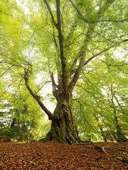 Pittodrie woods (M2105517 E-M1ii 7mm iso200 f8 0.5s) (Mel Stephens) Tags: garioch aberdeenshire scotland uk tree trees plant plants flora woods autumn 20171010 201710 2017 q4 olympus omd em1ii ii m43 microfourthirds mirrorless mzuiko pro 714mm explore explored
