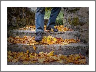Rascheln im Herbstlaub (Rustling in the autumn leaves)