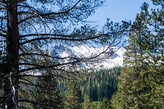 2017 Pac NW Lassen Volcanic-74 (Michael L Coyer) Tags: parks nationalparks usnationalparks unitedstatesnationalparks lassenvolcanicnationalpark lassen lassenvolcanic lassenvolcanicnatlpark mountain mount wilderness forest