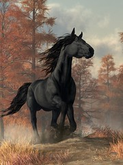 Halloween Horse (deskridge) Tags: halloweenhorse halloween horse equine friesian blackhorse darkhorse seasonal fall autumn mustang western wildhorse mane tail animal danieleskridge eskridge