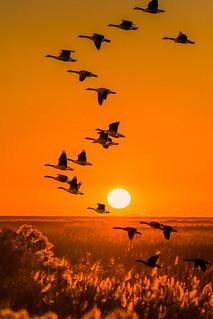 Chasing sun....!