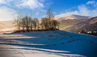 naked trees on hillside on foggy winter sunrise-161710
